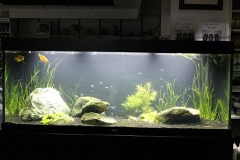 Aquarium ingericht door Marcel Kemper